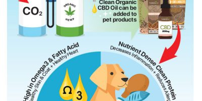 What Is Organic CBD Oil for Pets? [Infographic]