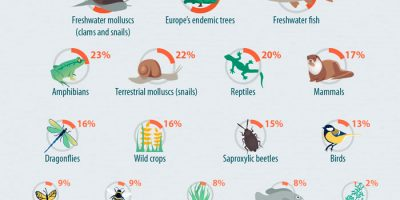 Endangered Species in Europe Infographic
