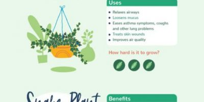 8 Plants with Benefits for Your Health
