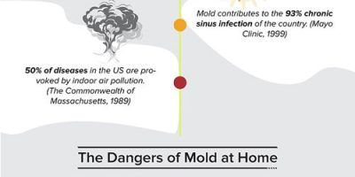 How to Prevent Black Mold [Infographic]