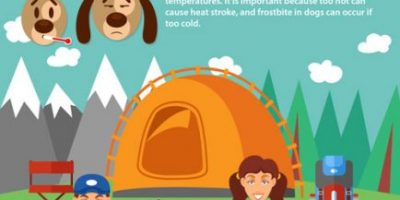 Hiking Tips for Dog Parents [Infographic]