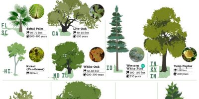 The State Trees of America [Infographic]