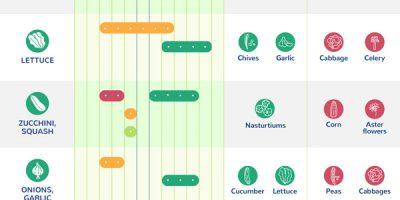 Planting Calendar Infographic