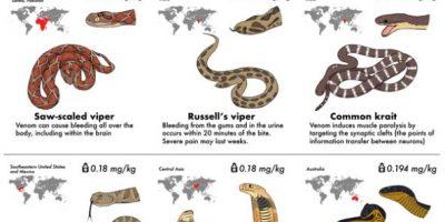 30 Most Venomous Snakes [Infographic]