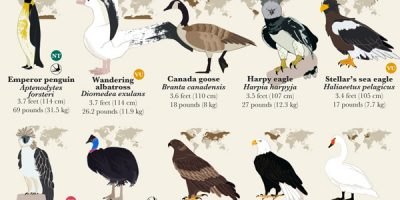 55 Bird Species Ranked by Size [Infographic]