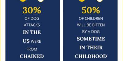 California Dog Bite Statistics [Infographic]