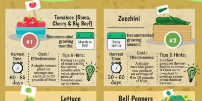 Veggies & Herbs to Grow at Home [Infographic]