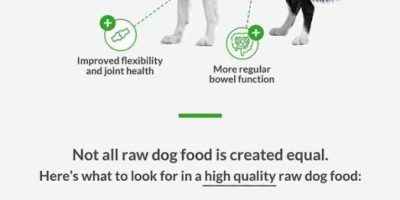 Raw Food Diet for Dogs [Infographic]