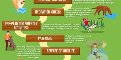 Camping with Dogs [Infographic]