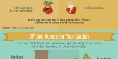 Creating a Bee Friendly Garden [Infographic]