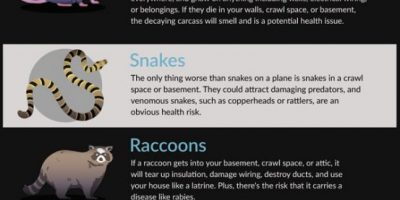 Which Animals Cause the Most Damage to Your Home?
